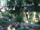 симпатичное местечко в Алупке