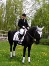 Любимая лошадь