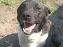 Мой пес!)))
