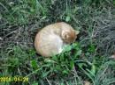 Классный кот свил себе гнездо...Пирогово