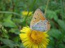 Завтрак бабочки