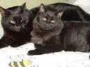 Найдите два черных кота, поместите их в однокомнатную квартиру...и будет вам счастье!