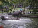 слоники...купаются:)