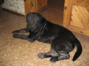 А это Мой Любимый Пес !!!