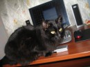 мой кот с телефончиком