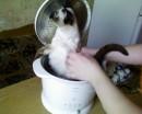 Кошка фри