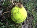 во дворе на даче, лежит себе мячик... (мой старенький, теннисный... играл когда-то)