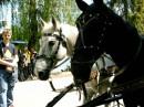три коня!!!!