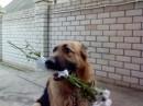 Моя собака Ренка поздравляет меня с Деньриком