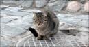 Кот, которого сделал Алекс :)