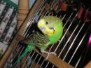 Моя любимая птичка. Ихо зовут!!!