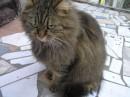 кися)) еле сфоткала, она так бегла и дергалась... и вообще, ненавижу кошек!!