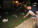 возле соседнего отеля было так много зайцев.. капец