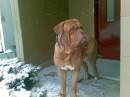 мой собак
