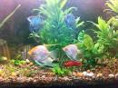 а это мой самый любимый аквариум!!!!!!