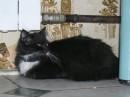 Это моя кошка
