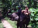 экзотика джунглей