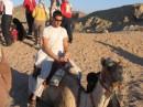 Управление верблюдом - дело нелегкое