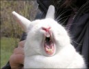 Кролик в ужасе!!!
