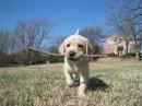 ето мой пес- джек.