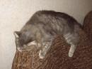 Мой кот...