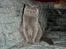 Мой любимый котик.........!!!!!!!!!!!!!!!!!!!!!! я его очень люблю.....!!!!!!