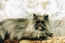 кисена - моя кошка