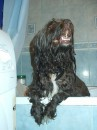 Мой мокрый пес