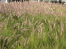 АДская трава )