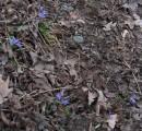Ще більше живих квітів