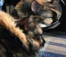 Это моя маленькая кошечка. Зовут чудо просто - Катя.