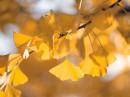 Будь благодарен за хорошее, старайся изменить то, что возможно и принять то, что изменить нельзя...