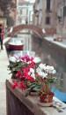А вот, на парапете - цветы. Никто их не берет, не гасит в горшках бычки и не спихивает в канал! Такой удивительный город - Венеция!