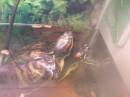 они так быстро плавают по аквариуму...