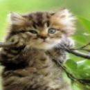 Я завис на ветке дерева.....