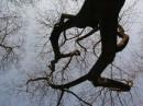 небесные корни