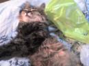 Лю-Лю (так ласково я называю свою кошечку Люсечку)
