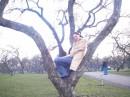 в Коломенском , яблоневый сад