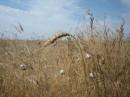 Николаевка. 2006. (западное побережье Крыма)