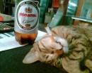 Такой вот кот на работе у мя...гггггг.....
