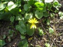 Весенний цветочек :)