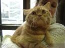 Мои хроники с выставки котов:) Я тож люблю их