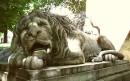 сплячі леви рідного міста