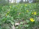 Весна идет по земле