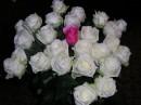 Упругий бутон тянет к свету  белая  роза в саду;  звезда тонет в дымке рассвета,  устав отражаться в пруду.    Дождавшись предутренней сини,  дробит тишину соловей,  как будто воскрес Паганини  с бессмертною скрипкой своей.