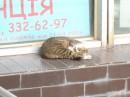 Котейко которое спить :-)