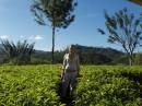 Я на чайной плантации.