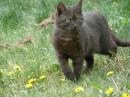 фокие коты водятся возле КПИ