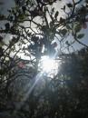 Солнце на небе услышало радостный привет маленького солнышка на Земле и   послало яркий луч Света. Тучи отступили и стало тепло.