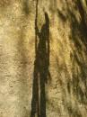 моя тень